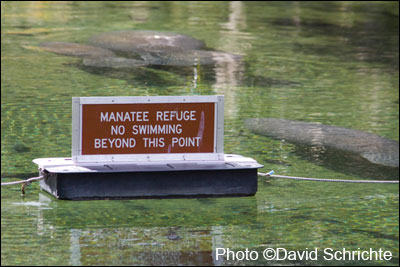 Manatee refuge sign at Blue Spring State Park.