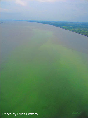Aerial photograph of the Indian River Lagoon algal bloom in 2012.