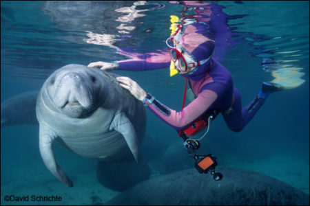 David Schrichte photo of a person touching a manatee.