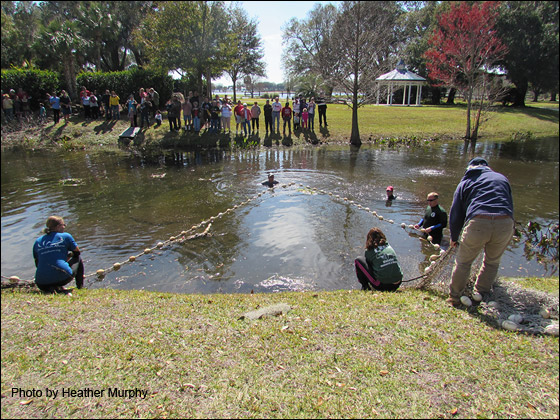 Rescue team members deploy a net and draw the manatee slowly to the shore.
