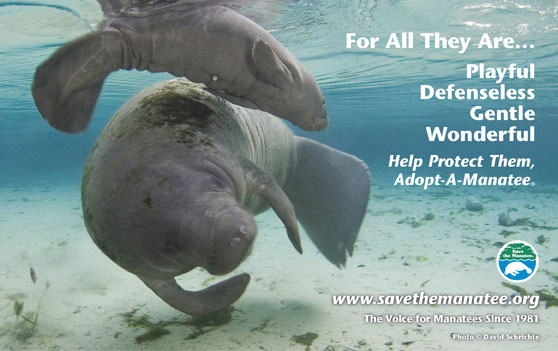 For All They Are -- Help Protect Them