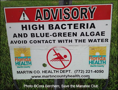 Algae bloom warming sign