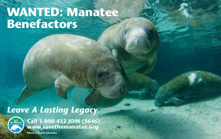 Wanted: Manatee Benefactors public service ad
