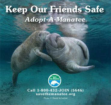 Keep Our Friends Safe Manatee PSA Ad