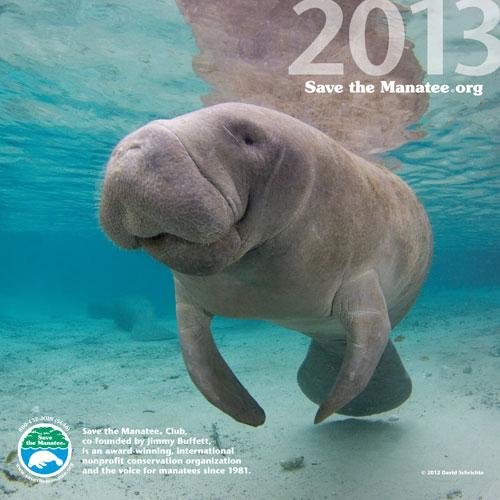 2013 Manatee Wall Calendar