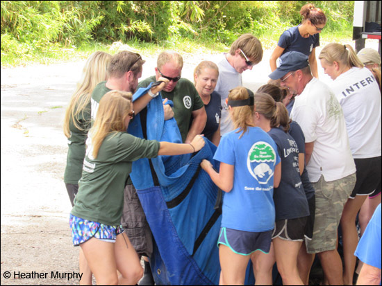Leesburg the manatee is released in Florida.