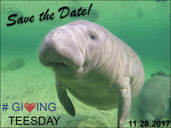 Save the Date for Giving TEESday