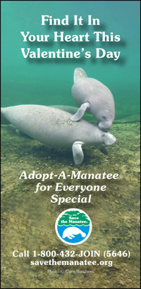 Find It In Your Heart This Valentine's Day: Adopt-A-Manatee for Everyone Special
