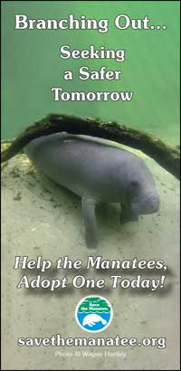 Help the Manatees, Adopt One Today!