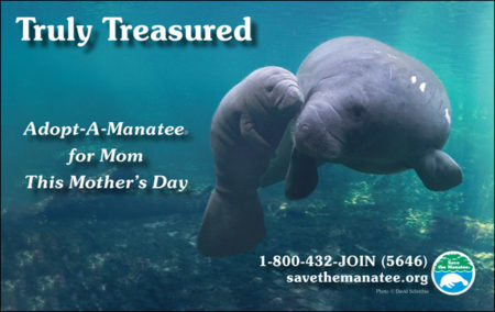Manatee PSA Mother's Day 2019