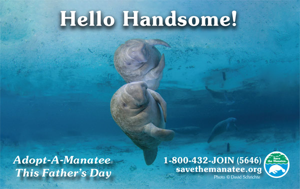 Hello Handsome! Adopt-A-Manatee This Father's Day