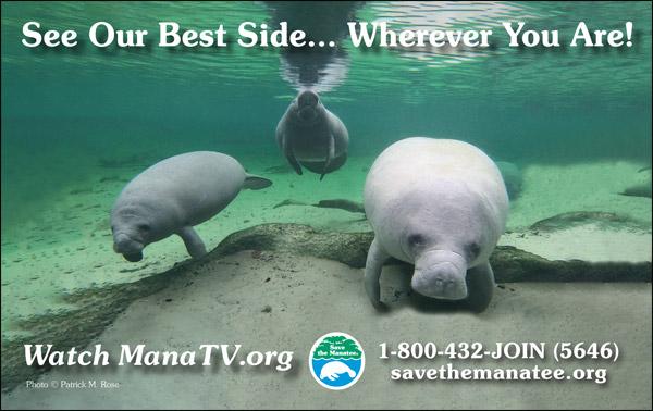 Webcam PSA Ad