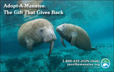 Manatee Holiday Public Service Ad