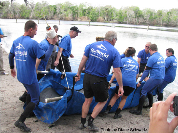Amber the manatee is released at Blue Spring State Park in 2009.