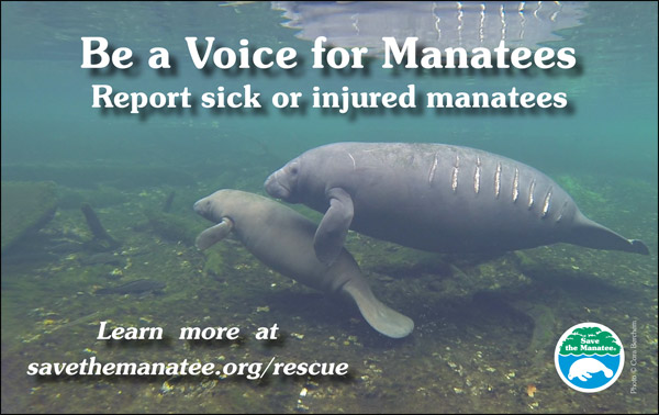 Be a Voice for Manatees