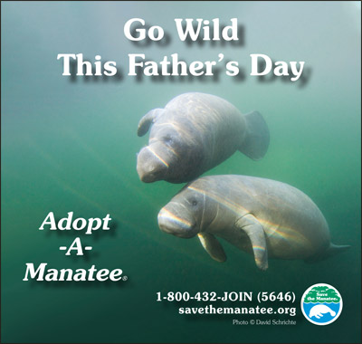 Manatee PSA Father's Day 2020