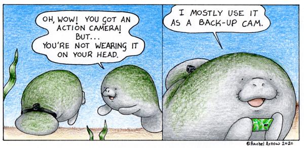 Man versus Manatee comic by Rachel Arnow.