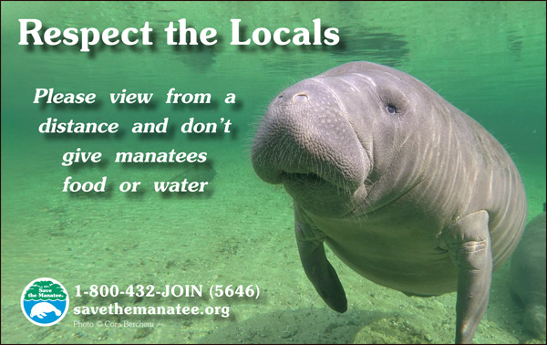 Respect the Locals Manatee PSA ad