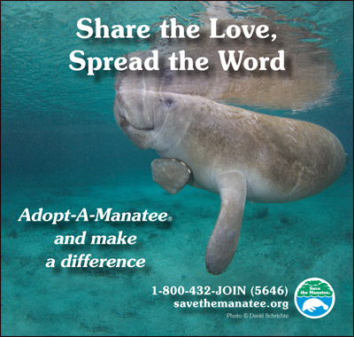 Share the Love Manatee PSA ad