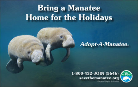 Bring a Manatee Home for the Holidays PSA ad