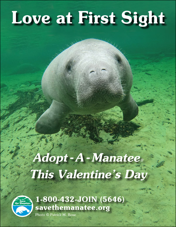 Love at First Sight: Adopt-A-Manatee This Valentine's Day
