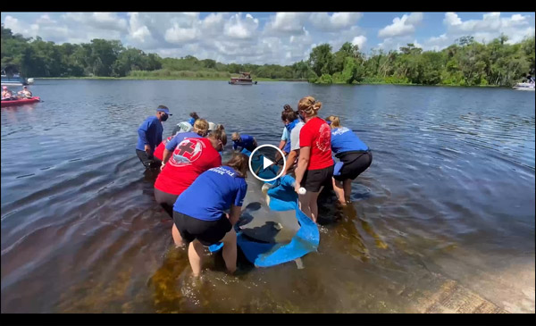 Faye the manatee is released.