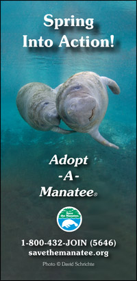 Spring Into Action Manatee PSA Ad
