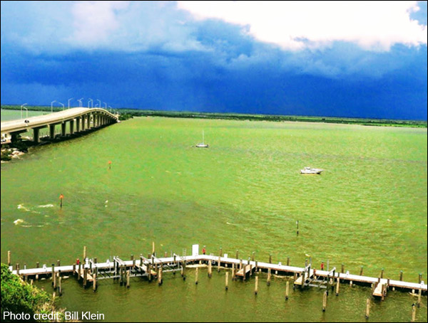 An algae bloom in the Indian River Lagoon.
