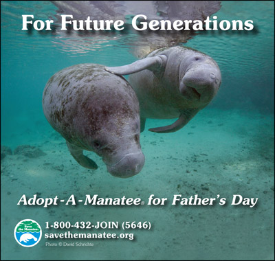For future generations. Adopt-A-Manatee.