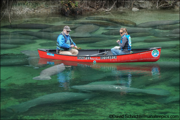 Manatee researchers at Blue Spring State Park.