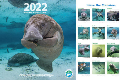 2022 Manatee Wall Calendar