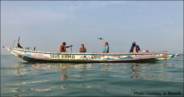 Doing manatee surveys in Senegal.