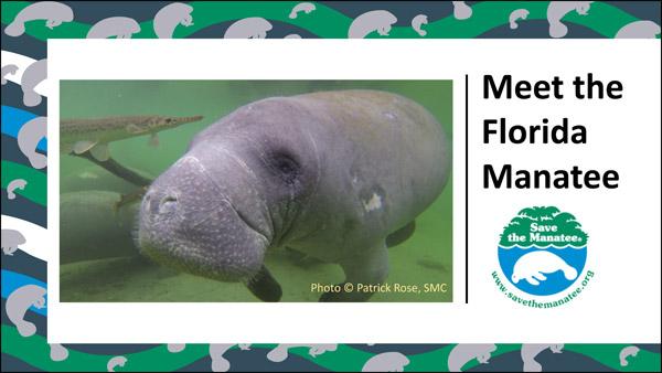Meet the Florida Manatee PowerPoint Slide Show